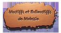 Demolossie, Elevage de mastiffs etbullmastiffs de Molossie