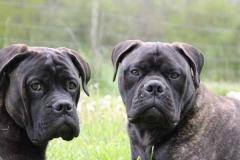 Harry à gauche et Jimmy à droite 6 mois