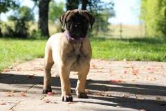 Laika à 2 mois