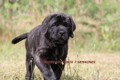 LEONIE-7-SEMAINES