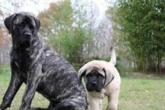 Leonie-5-mois-avec-Zeus-2-mois